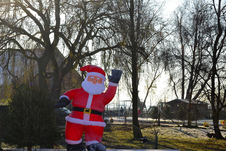 Nordmann Excellent kerstbomen Lisse